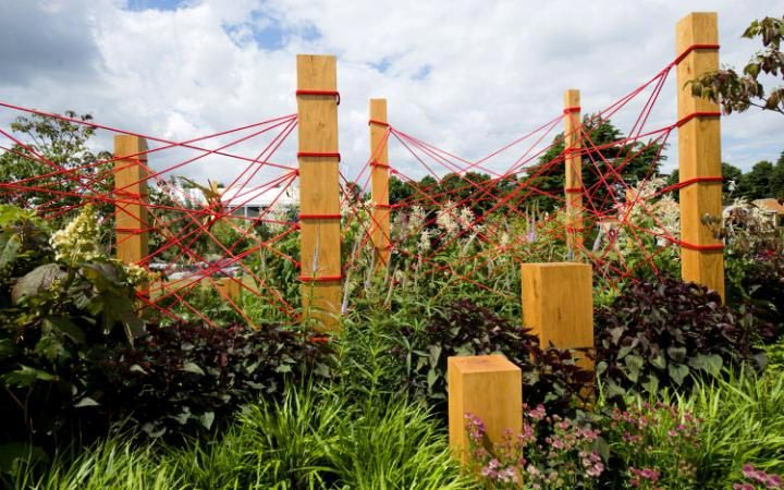RHS Gold Medal Winner - The Red Thread
