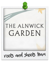 Roots and Shoots Team Alnwick Reviews HOTBIN