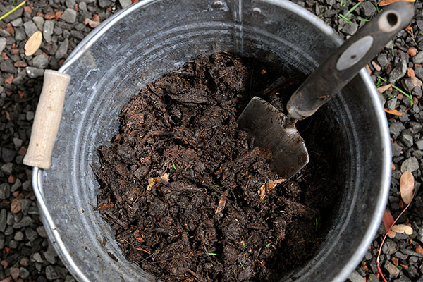 Homemade Compost in Pot